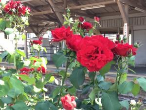 1605ポスト薔薇